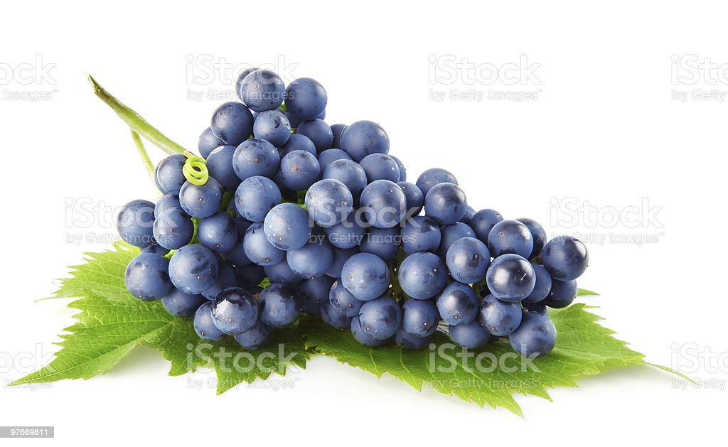 blue grape with green leaves isolated fruit stock photo