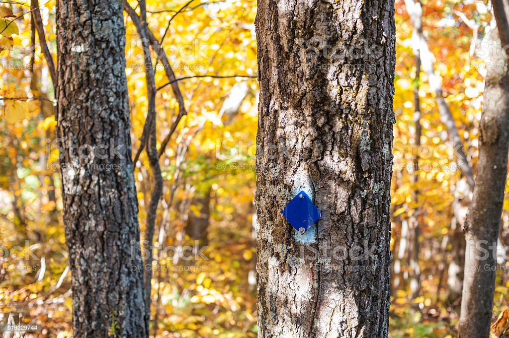 Blue hiking trail marker on tree in autumn stock photo