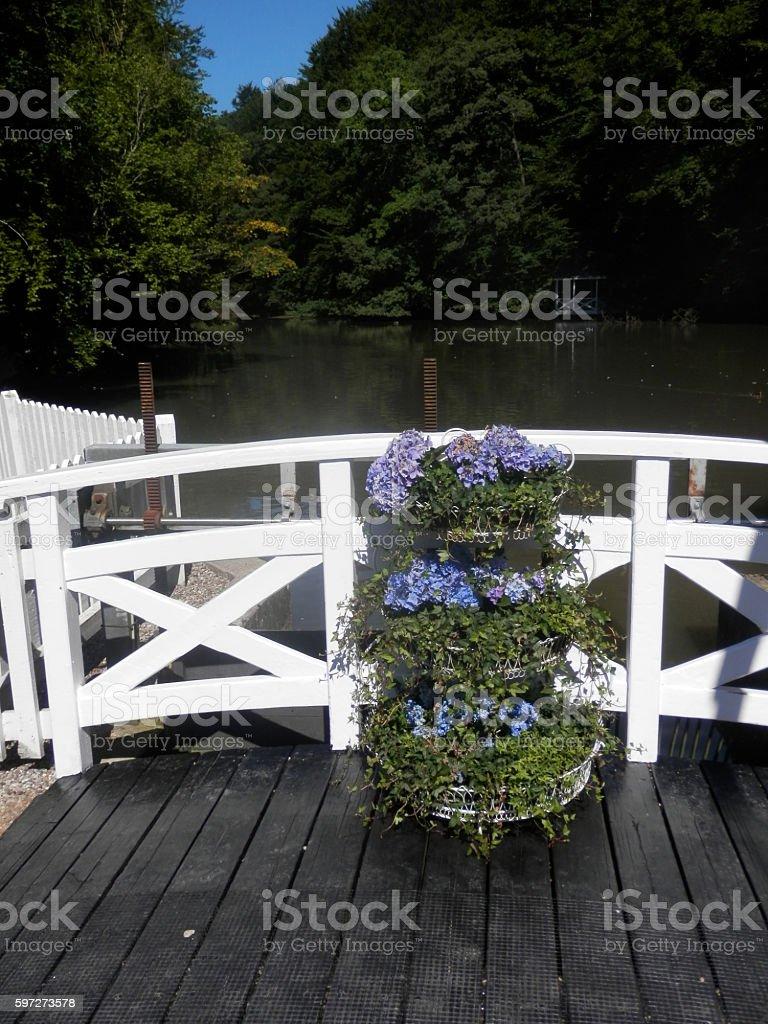 Blue hydrengea on wooden bridge stock photo