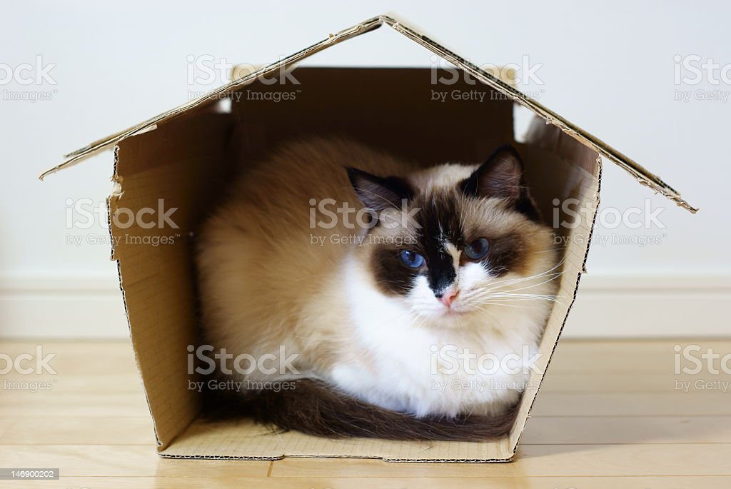 Blue image with cat silhouette and pink lines on the top stock photo
