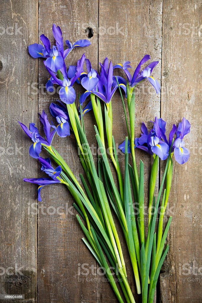 Blue Iris Bunch. stock photo