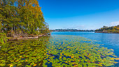 Blue lake covered with green leaves of water lilies. Autumn.