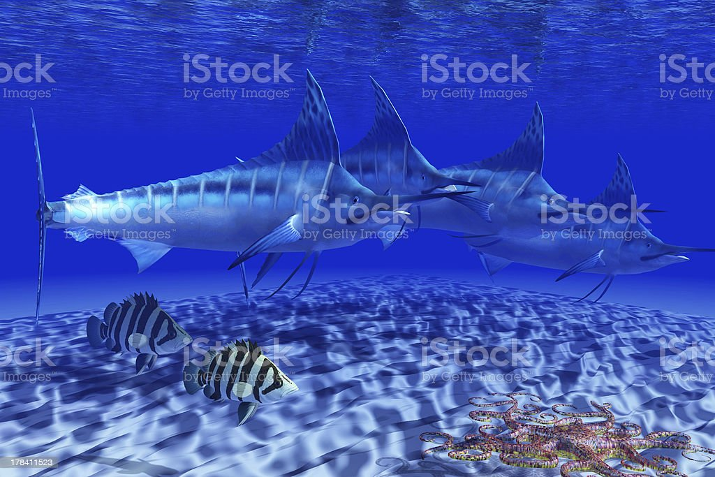Blue Marlin Pack stock photo