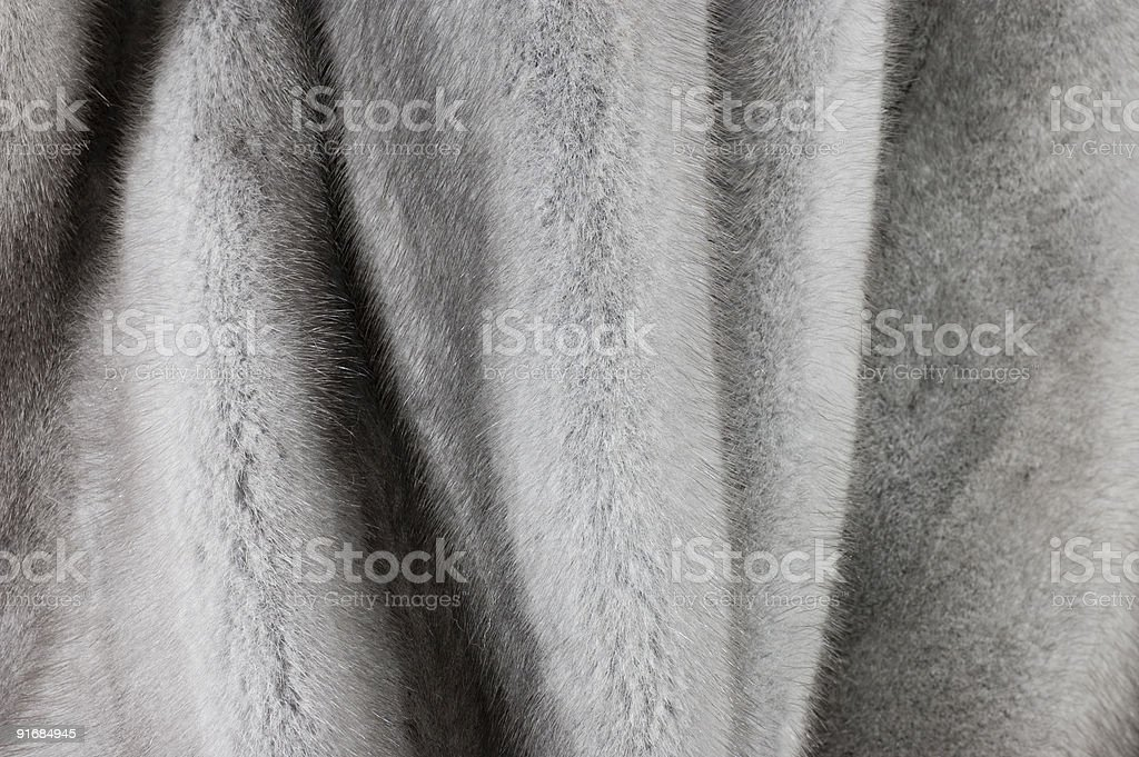 Blue mink stock photo