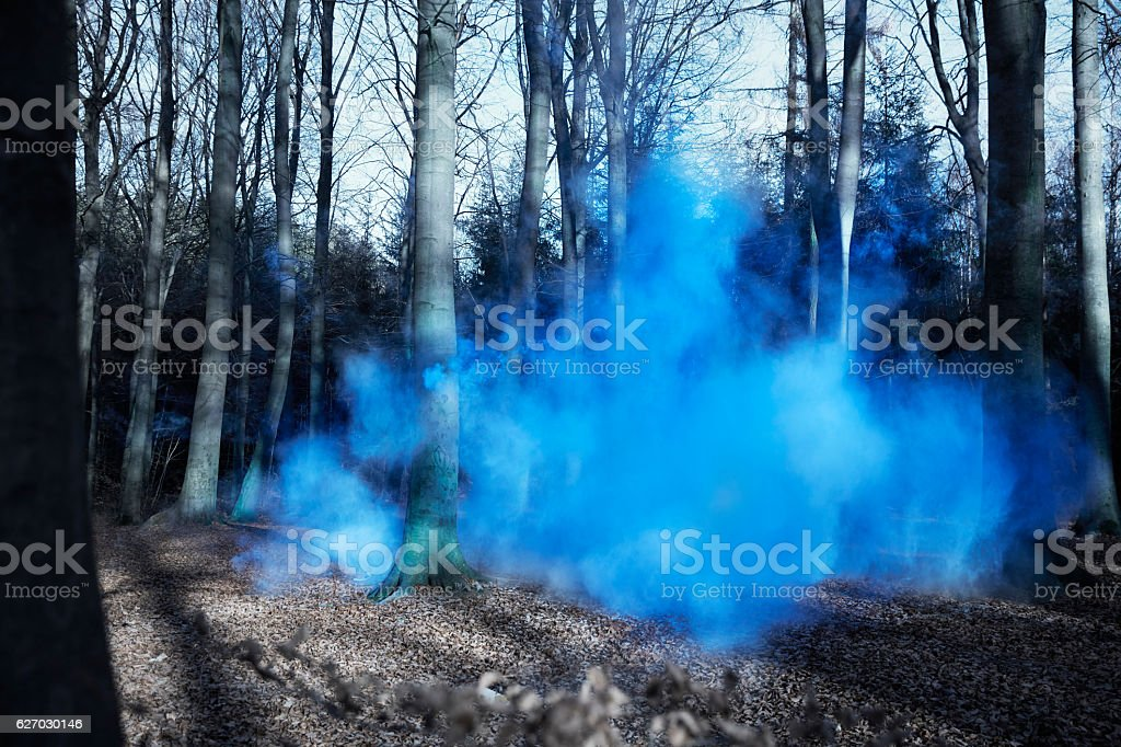 Blue Mist in forest stock photo