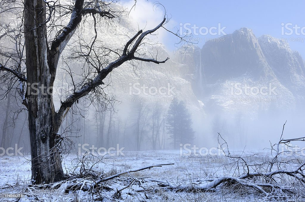 Blue misty morning in Yosemity National Park royalty-free stock photo