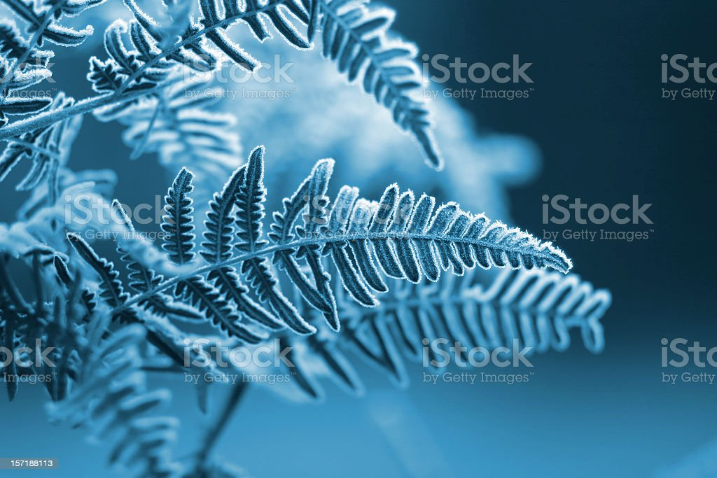 A blue monochromatic photo of frozen fern leaves stock photo