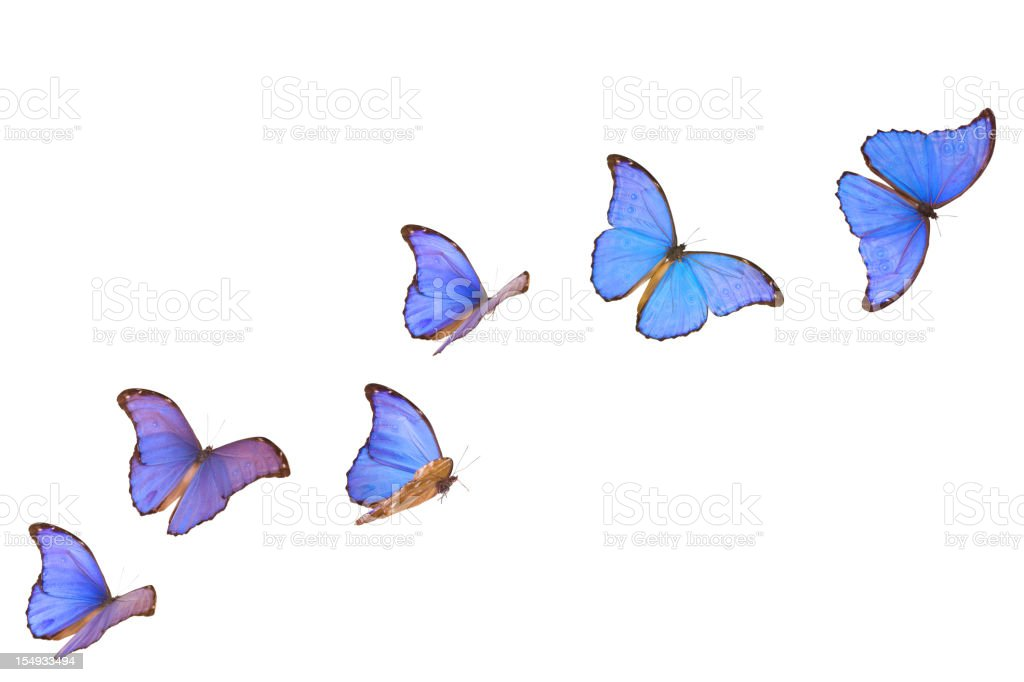 Blue Morpho Butterfly Banner stock photo