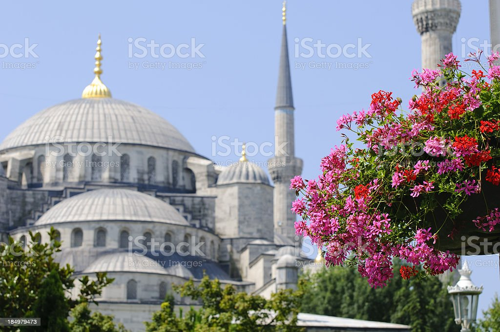 Blue Mosque and flowers in Istanbul, Turkey royalty-free stock photo