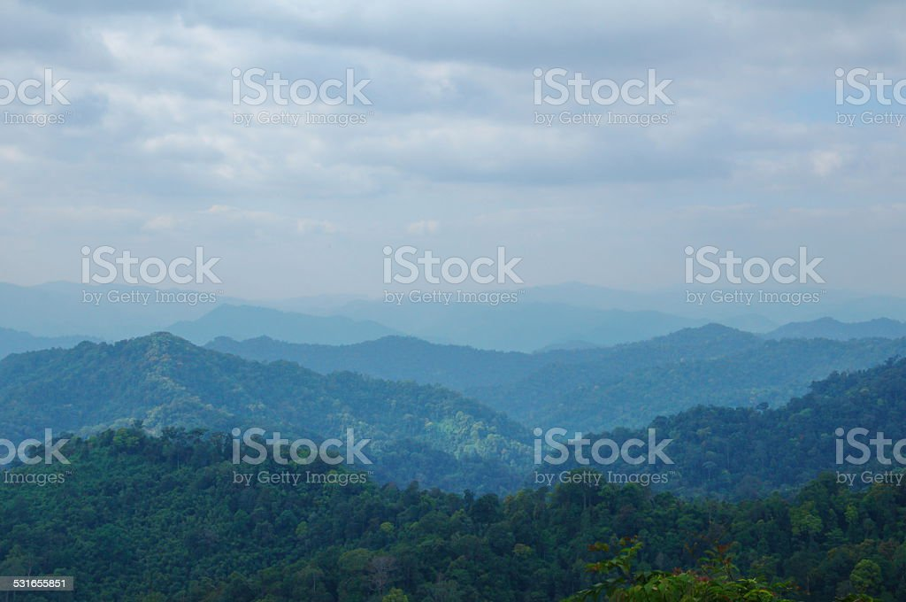 blue mountain evergreen forest stock photo