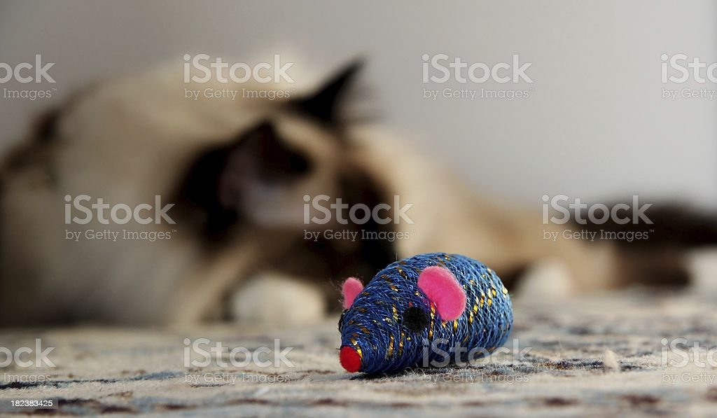 blue mouse stock photo