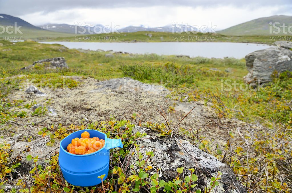 Blue mug with cloudberries in arctic landscape stock photo