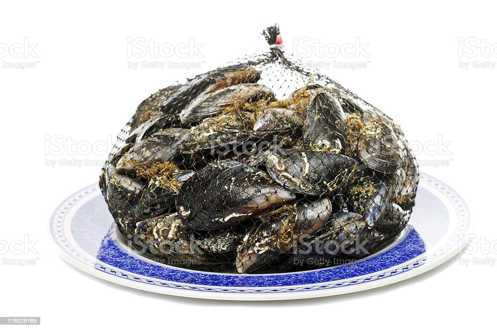 blue mussel bivalve royalty-free stock photo