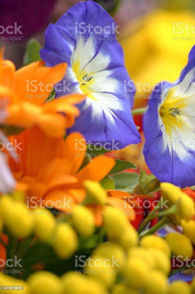 Blue Orange Yellow royalty-free stock photo
