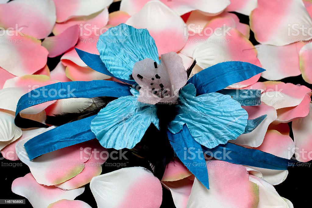 blue orchid and pink rose petals royalty-free stock photo