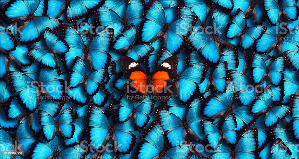 Blue PANORAMA Schmetterling Hintergrund – Foto