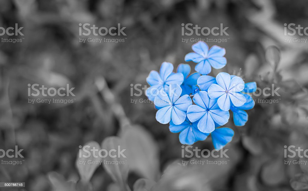 blue -purple  flowers stock photo