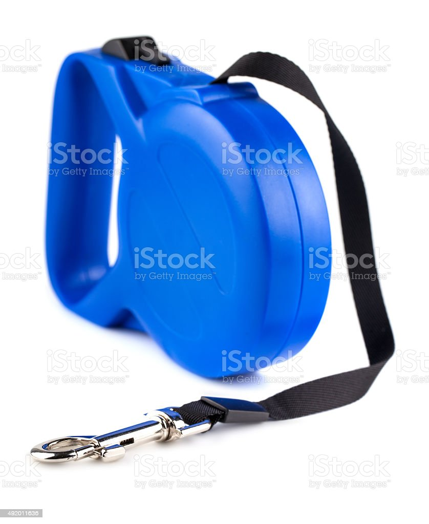 Blue retractable leash for dog stock photo