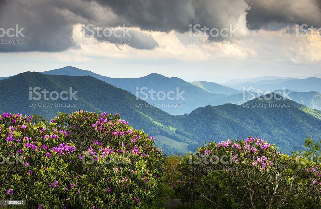 Blue Ridge Appalachian Mountain Peaks and Spring Rhododendron Flowers Blooming stock photo