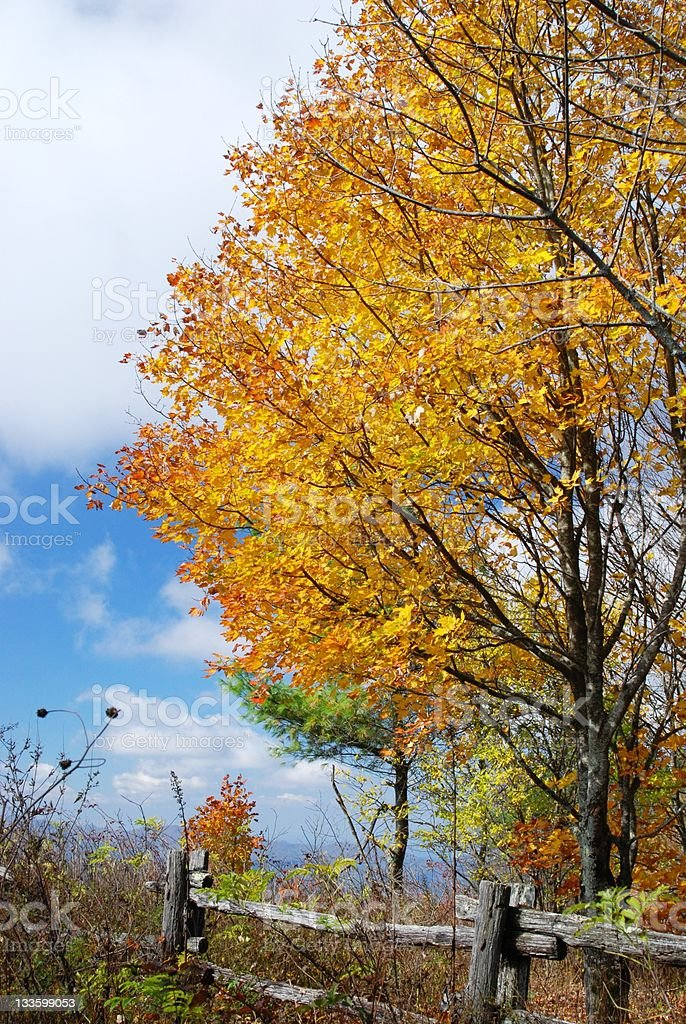 Blue Ridge Autumn royalty-free stock photo