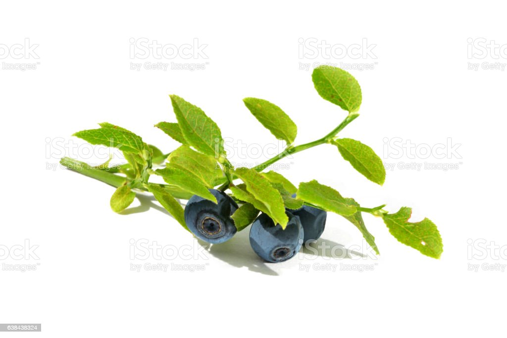 Blue ripe blueberries stock photo