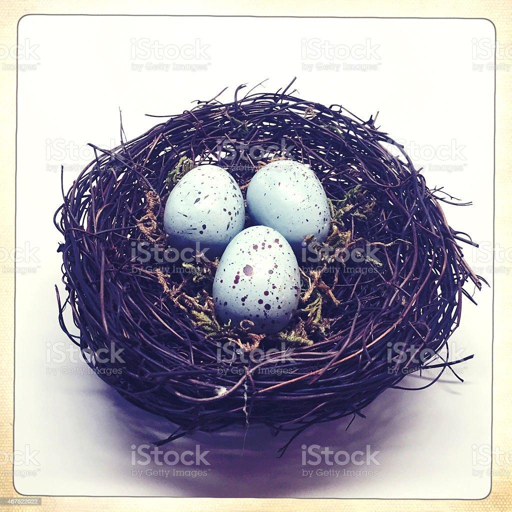 Blue Robins Egg Nest stock photo
