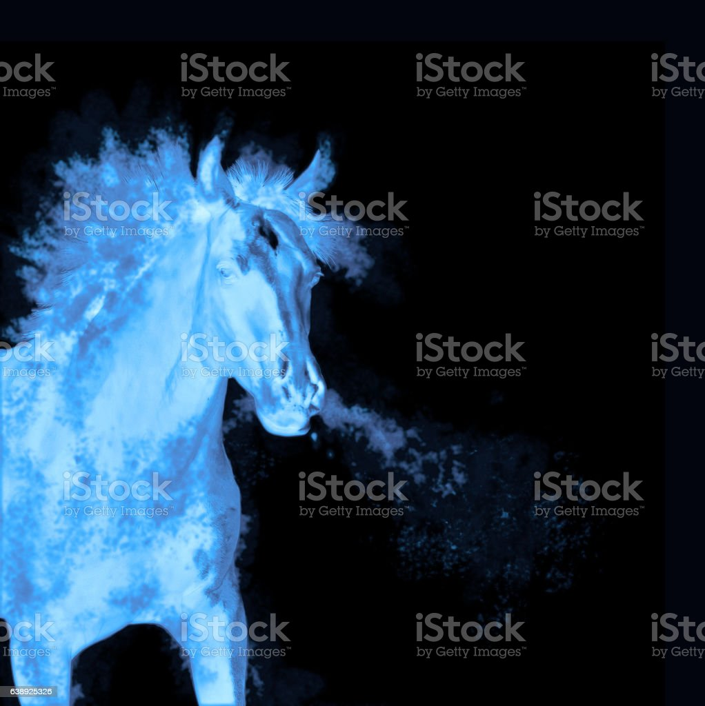 Blue running horse isolated on black stock photo