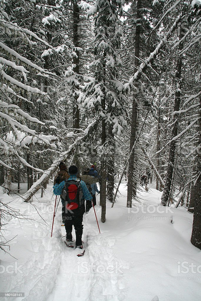Blue shirt, snowshoe hikers in woods stock photo