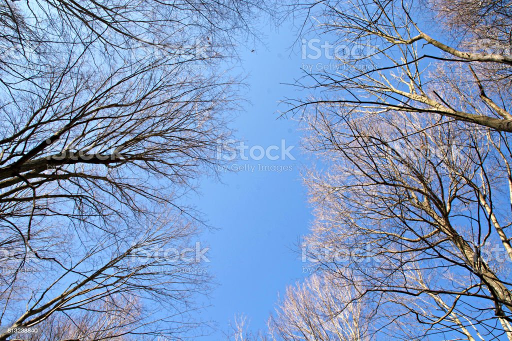 Blue Skies above the bare Trees stock photo
