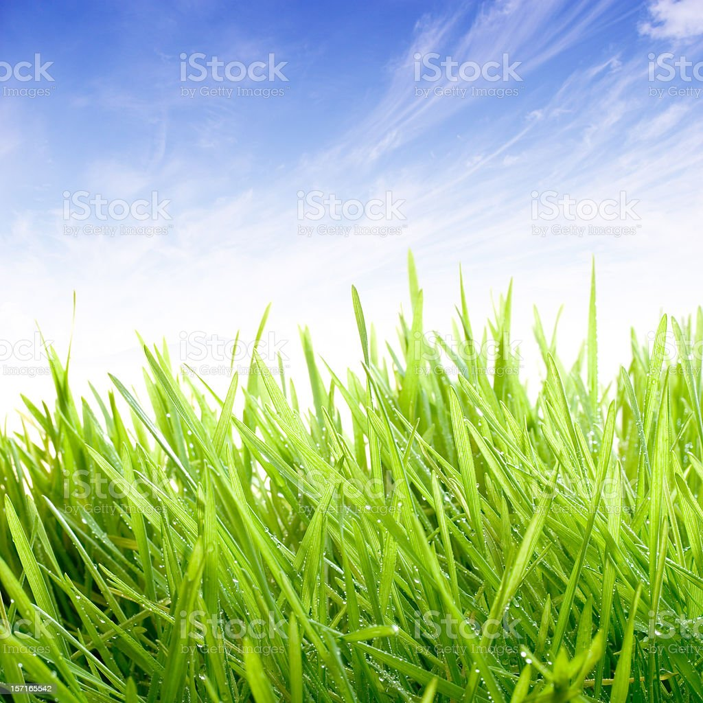 Blue Skies and Grass royalty-free stock photo