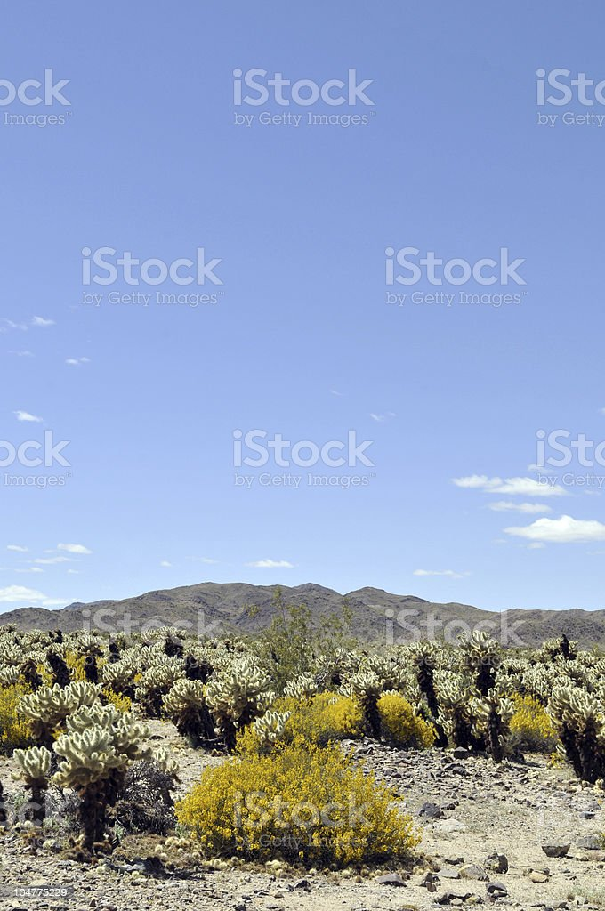 Blue Sky and Cholla Cactus royalty-free stock photo