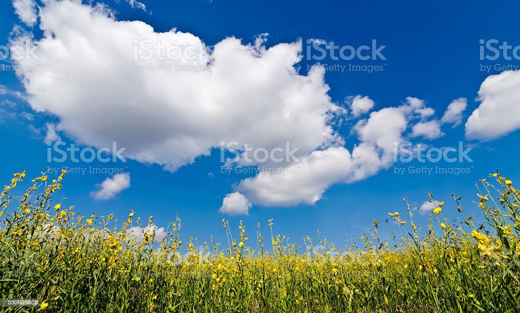blue sky and flower stock photo