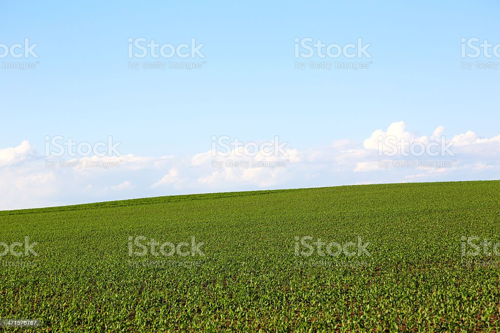 Blue sky and green field royalty-free stock photo