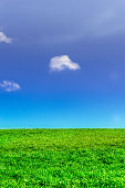 Blue sky and green grass on hill in summer