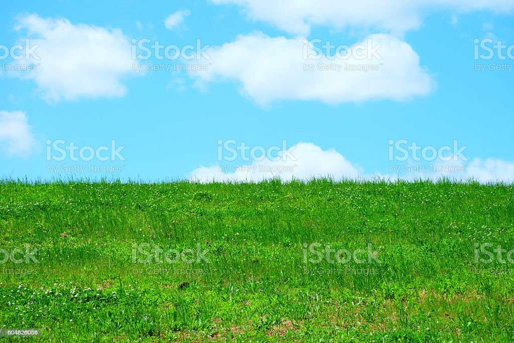 Blue sky and green lawn stock photo