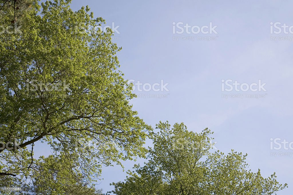 Blue Sky and Green Leafy Tree Canopy with Copy Space royalty-free stock photo