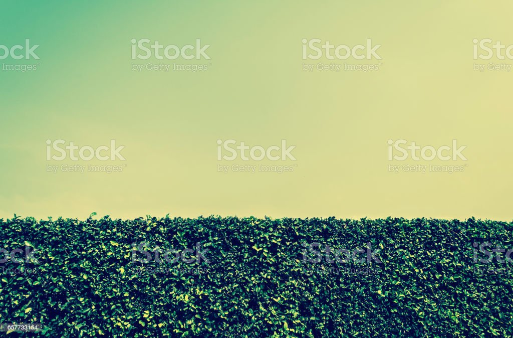 blue sky and green plant wall stock photo