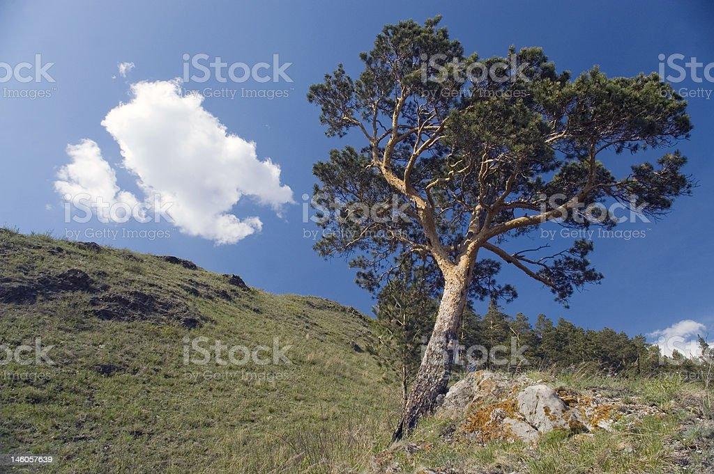 Blue sky and green tree. royalty-free stock photo