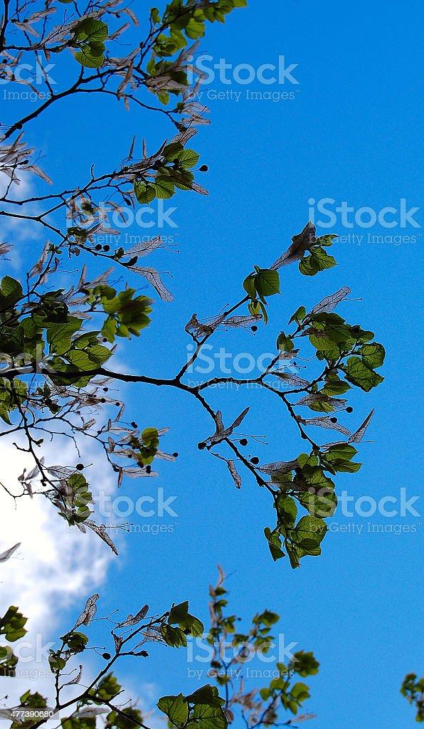 Błękitne niebo i pióra zbiór zdjęć royalty-free