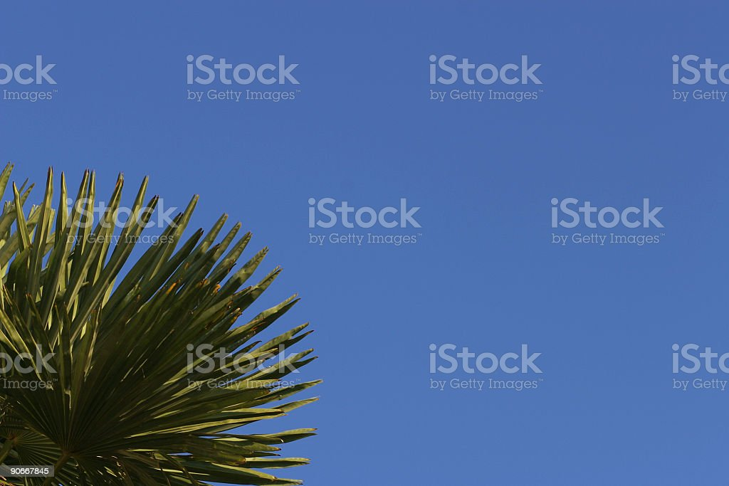 Blue sky and palm royalty-free stock photo
