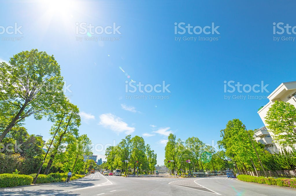 Blue sky and the fresh green of the three-way intersection stock photo