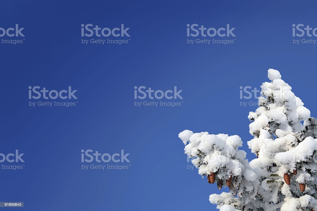 blue sky background with cones on fir royalty-free stock photo
