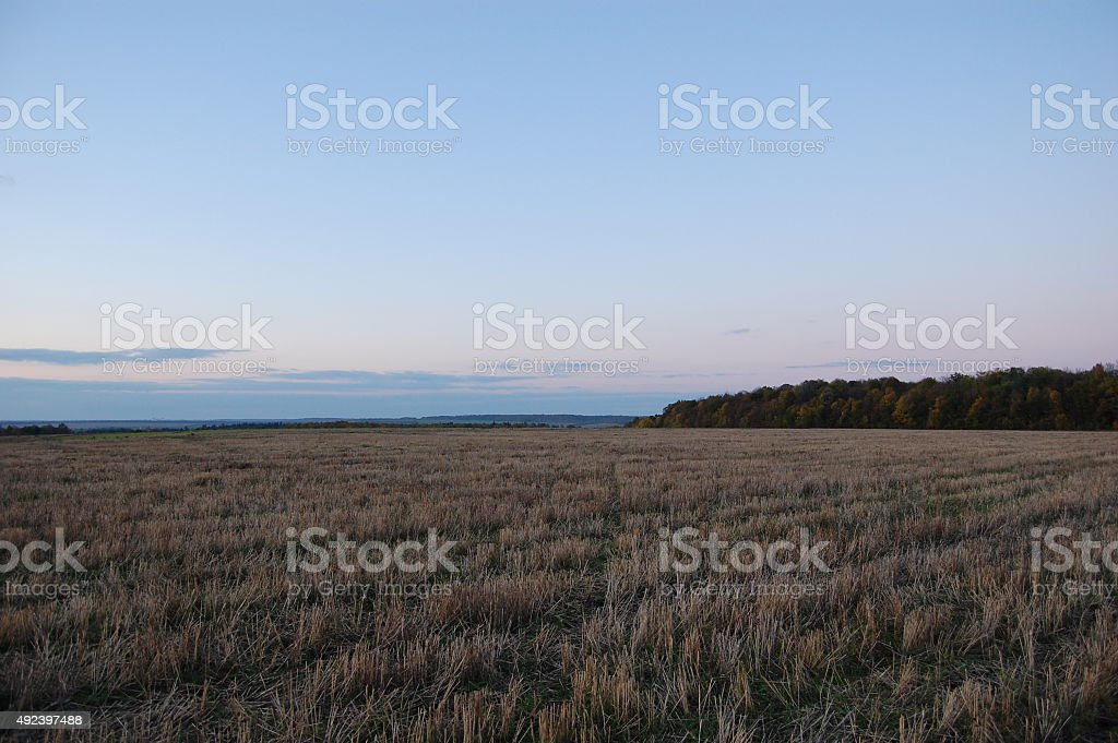 Blue sky, field, forest. royalty-free stock photo