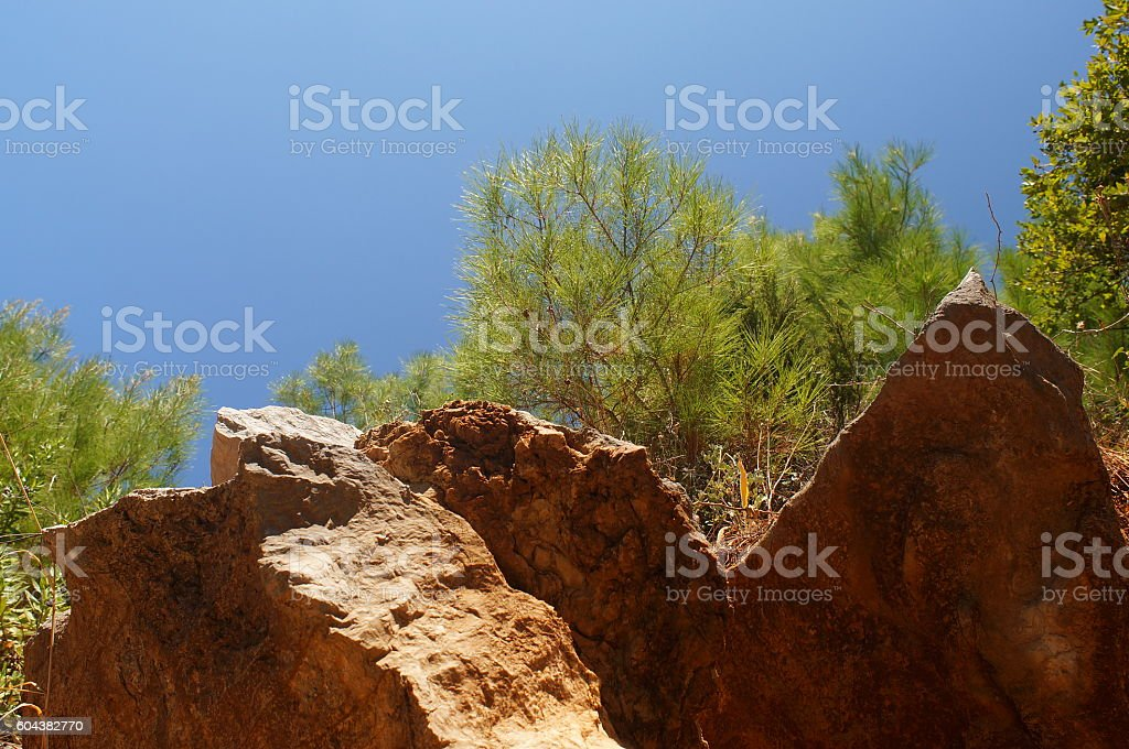 blue sky, fluffy black pine, green needles and powerful stones stock photo