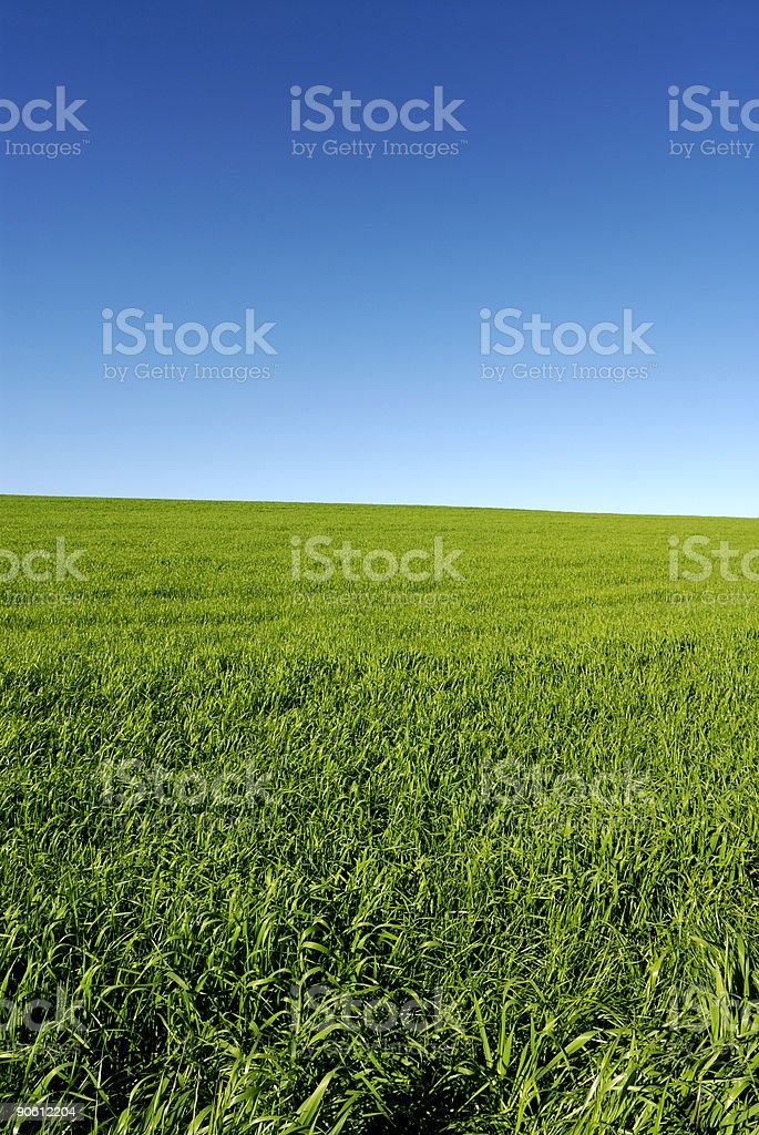 Blue Sky Grass stock photo