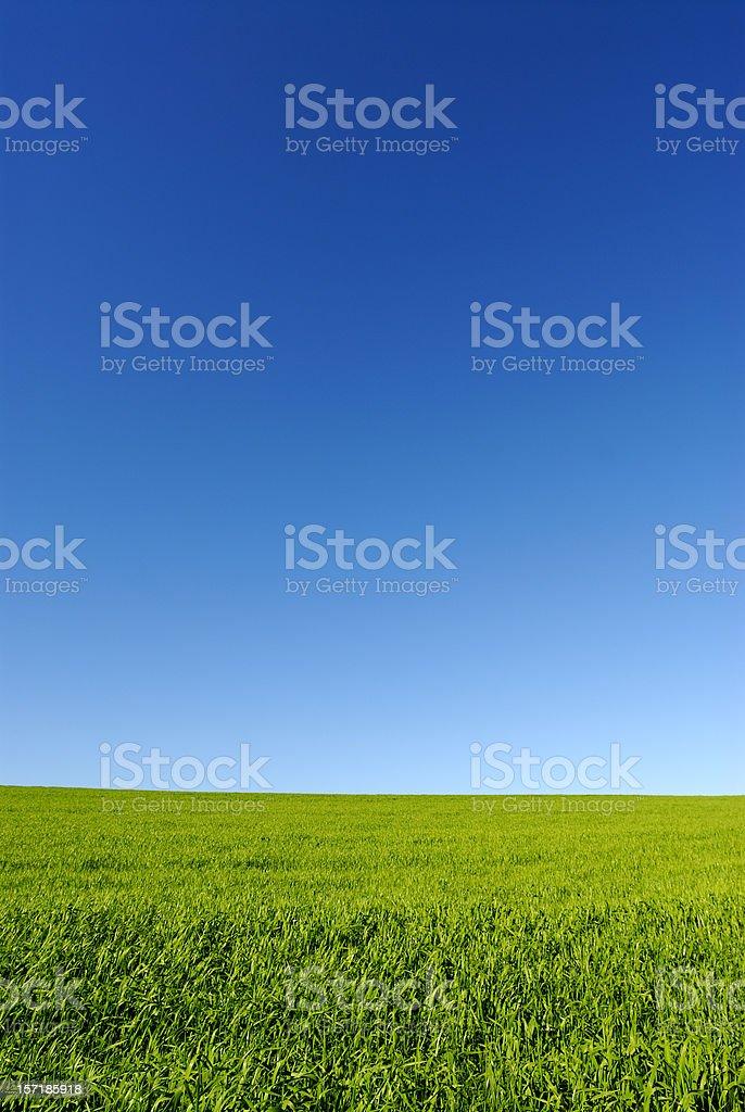 Blue sky green field royalty-free stock photo