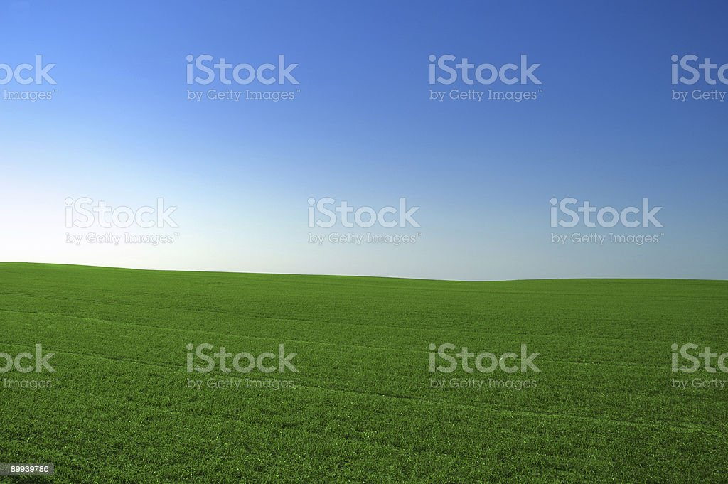blue sky green field stock photo