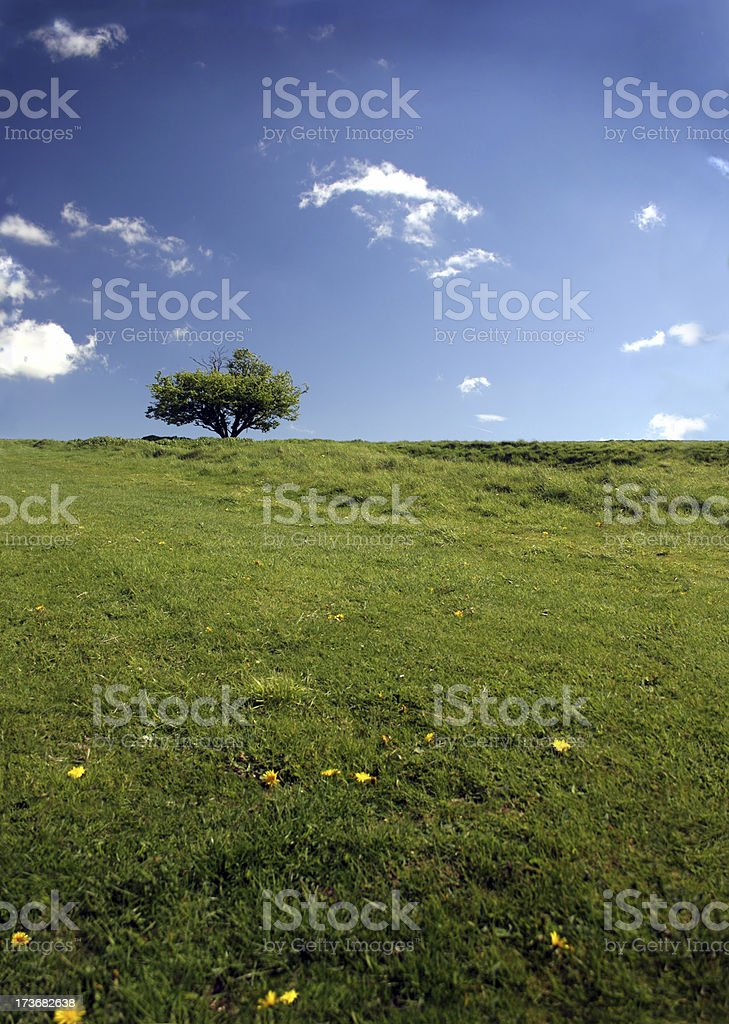 Blue sky, green grass, lonely tree, Oxfordshire, England XL #2 royalty-free stock photo