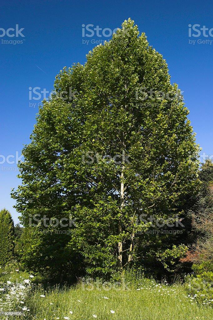 Blue sky, green tree stock photo