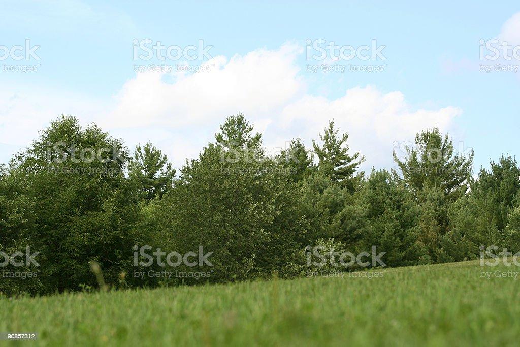 Blue sky, green trees, field stock photo